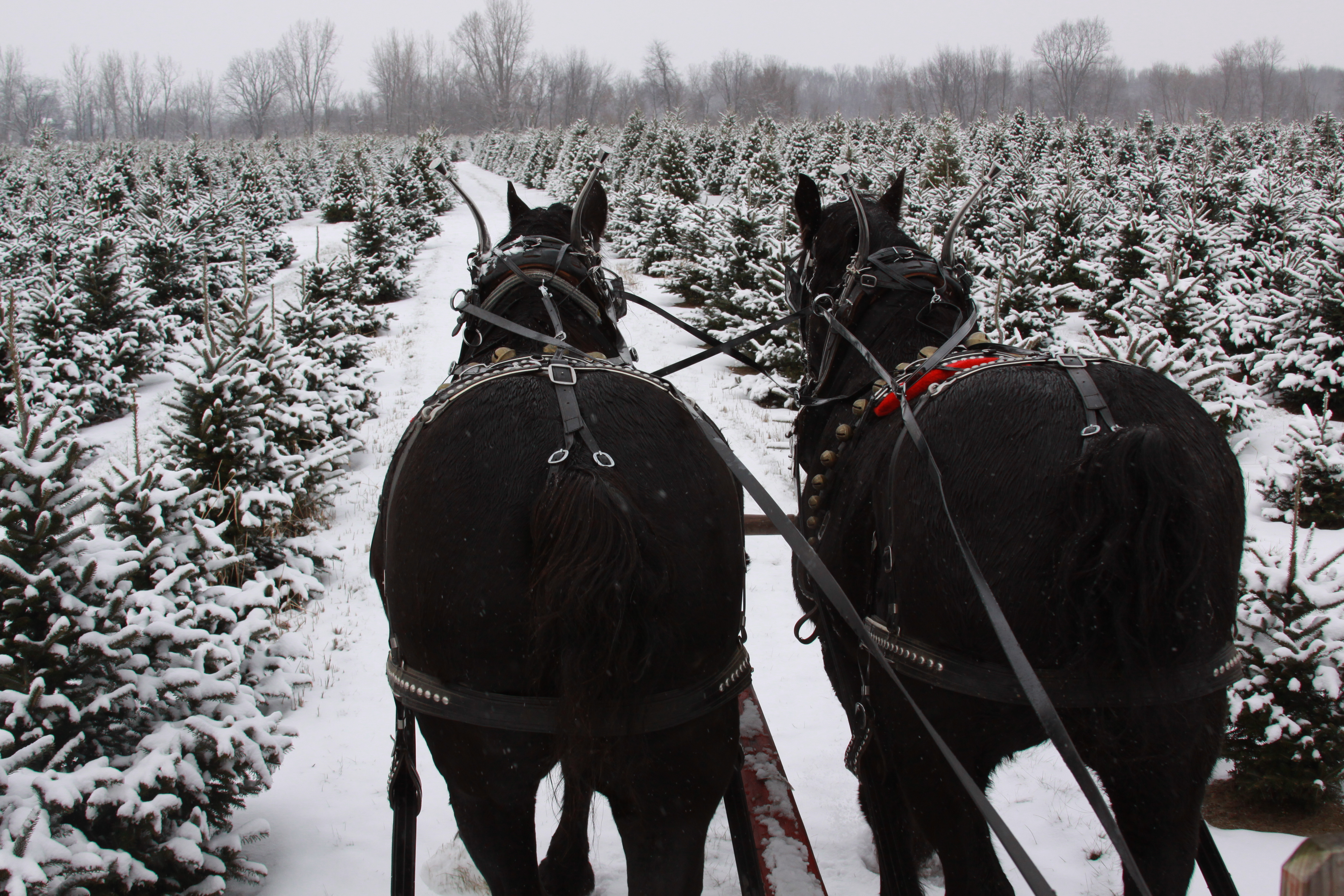 Sleigh ride in the trees